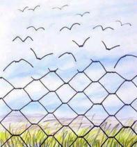 גדר וציפורים